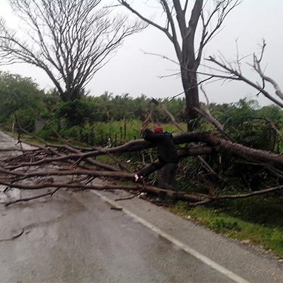 Ayuntamiento levanta árbol obstaculizaba carretera km 3